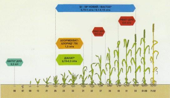 Ресурсосберегающая технология выращивания ярового ячменя 13